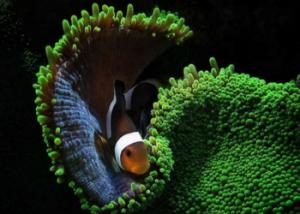 Underwater Photographers